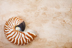 Nautilus On Old Paper Stock Photos