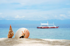 Nautilus and other conch on the white sand tropical beach of turquoise philippine sea with diving boat at sunny day. Under blue sky Royalty Free Stock Photos
