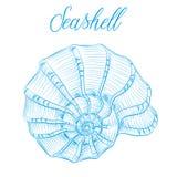 Nautilus overzeese shell Hand getrokken blauwe lineaire vectorillustratie Ma Stock Afbeelding
