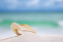 Nautilus paper shell on white sandy beach Stock Photography