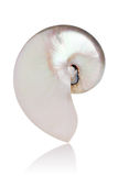 Nautilus perolizado Imagens de Stock Royalty Free