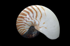 Nautilus pompilius cephalopod Stock Photo