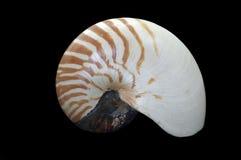 Nautilus pompilius cephalopod Stock Photo