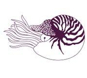 Nautilus Pompilius illustration Stock Photo