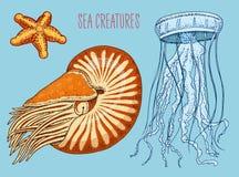 Nautilus pompilius, meduse e stelle marine della creatura del mare crostacei o mollusco o vongola inciso disegnato a mano nel vec royalty illustrazione gratis