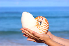 Nautilus Pompilius Stock Photography