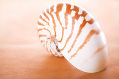 Nautilus pompilius shell on leather, Royalty Free Stock Images