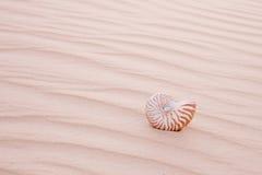 Nautilus pompilius shell in sand dune Stock Photo