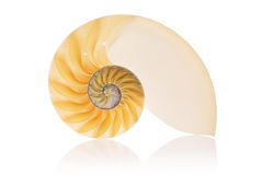 Nautilus rachado Imagem de Stock