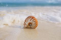 Nautilus sea shell in sea wave Stock Image