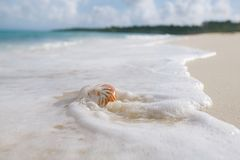 Nautilus sea shell in sea wave Royalty Free Stock Photo