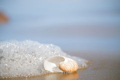 Nautilus sea shell on Atlantic ocean Legzira beach, morocco Royalty Free Stock Photos