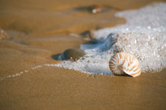 Nautilus sea shell on Atlantic ocean Legzira beach Stock Photo