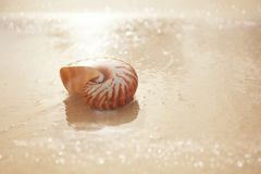 Nautilus sea shell  on beach  soft sunrise ight Stock Photos
