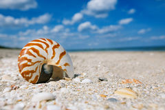Nautilus sea shell on golden sand beach with ocean waves in soft Stock Image
