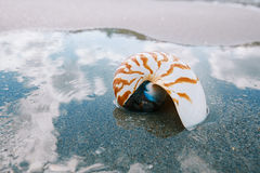 Nautilus sea shell on golden sand beach with ocean waves in soft Stock Images