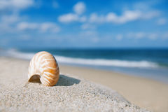 Nautilus sea shell on golden sand beach with ocean waves in soft Stock Photos