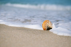 Nautilus sea shell on golden sand beach with ocean waves in soft Royalty Free Stock Images