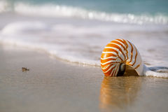 Nautilus sea shell on golden sand beach with ocean waves in soft Royalty Free Stock Photography