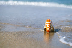 Nautilus sea shell on golden sand beach with ocean waves in soft Royalty Free Stock Image