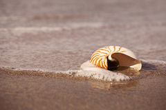 Nautilus sea shell on golden sand beach with ocean waves in soft Royalty Free Stock Photos
