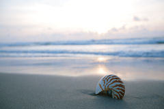 Nautilus sea shell on golden sand beach in  soft sunrise ight. Nautilus sea shell on golden sand beach with waves in  soft sun rise light, shallow dof Royalty Free Stock Photo