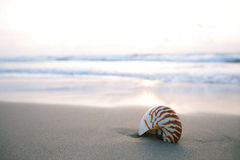 Nautilus sea shell on golden sand beach in  soft sunrise ight Royalty Free Stock Photos