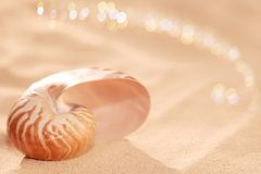Nautilus sea shell on golden sand beach in  soft sunset light. Nautilus sea shell on golden sand beach with waves in  soft sunset light, shallow dof Royalty Free Stock Images