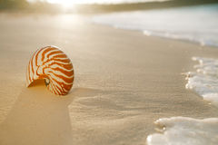 Nautilus sea shell on golden sand beach in  soft sunset light. Nautilus sea shell on golden sand beach with waves in  soft sunset light, shallow dof Stock Photography