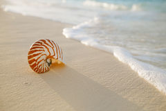 Nautilus sea shell on golden sand beach in  soft sunset light Stock Photo