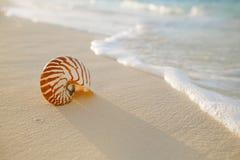 Nautilus sea shell on golden sand beach in soft sunset light. Nautilus sea shell on golden sand beach with waves in soft sunset light, shallow dof stock photo