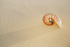 Nautilus sea shell on golden sand beach in  soft sunset light Royalty Free Stock Images