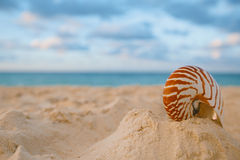 Nautilus sea shell on golden sand beach in  soft sunset light Royalty Free Stock Photography