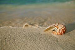 Nautilus sea shell on golden sand beach in  soft sunset light Stock Image