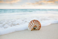 Nautilus sea shell on golden sand beach in  soft sunset light Stock Images