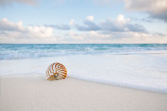 Nautilus sea shell on golden sand beach in  soft sunset light Royalty Free Stock Image