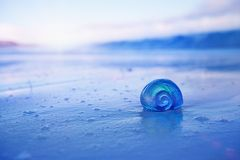 Nautilus sea shell  with waves in  soft blue sunrise ight. Nautilus sea shell on golden sand beach with waves in  delicate blue sunrise ight, shallow dof Stock Photo