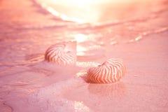 Nautilus sea shell on golden sand beach in  soft sunset light Royalty Free Stock Photos