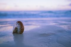 Nautilus sea shell on beach blue sunrise light. Nautilus sea shell on sand beach in delicate blue sunrise light, shallow dof stock photos