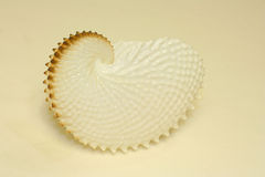 Nautilus sea shell still life. A still life shot of a nautilus shell against a plain background Royalty Free Stock Image