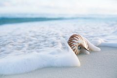 Nautilus sea shell in sea wave Stock Photos