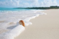 Nautilus sea shell in sea wave Royalty Free Stock Image