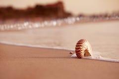 Nautilus Seashell на пляже моря с волнами под ligh солнца восхода солнца Стоковое Изображение