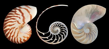 Nautilus Seashell Royalty Free Stock Photos