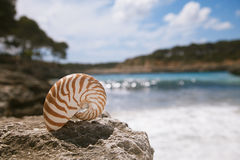 Nautilus seashell  beach  and Mediterranean sea Stock Image