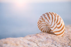 Nautilus seashell sand on sunrise and ocean Royalty Free Stock Photos