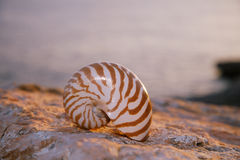Nautilus seashell sand on sunrise and ocean Royalty Free Stock Images