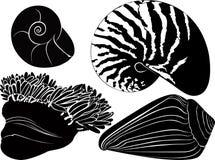 Nautilus seashells anemones. Isolated on white background stock illustration