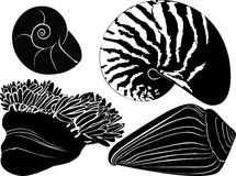 Nautilus seashells  anemones Stock Image