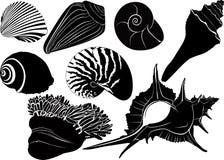 Nautilus seashells anemones. Isolated on white background royalty free illustration
